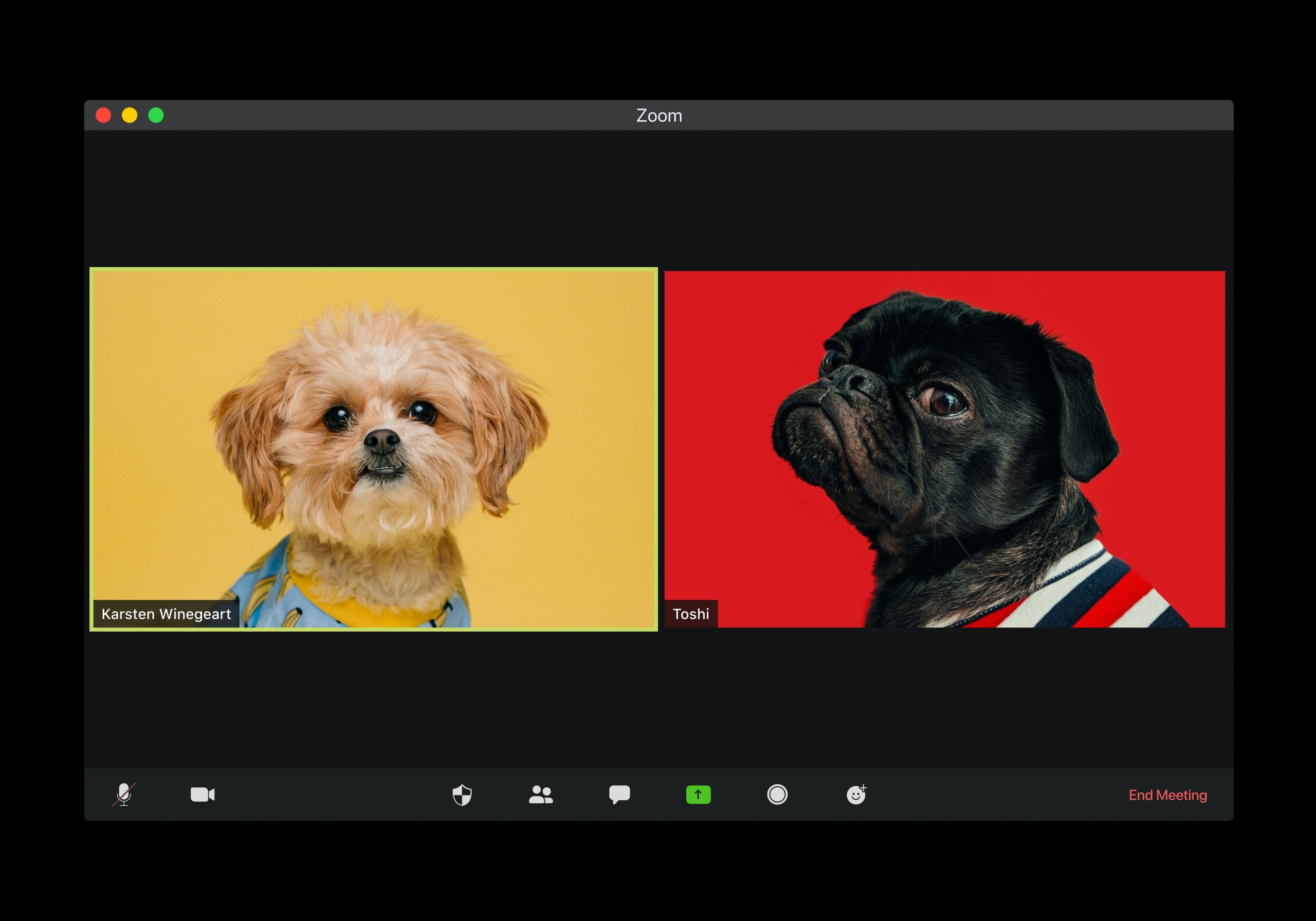 computer screen with Zoom meeting running but picture sof dogs instead of video feeds